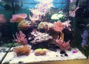 Meerwasserfische und Korallen