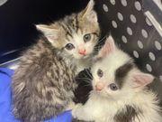 4 süße Kätzchen Kater suchen