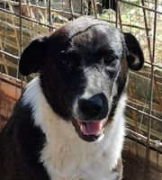 Kinga - 2 Jahre - liebenswertes Hundemädchen