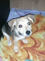 Jack Russell Mischling
