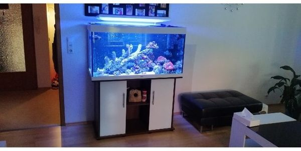meerwasseraquarium 350 liter
