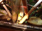 Madagascar TagGecko x2 Terrarium Technik