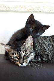 3 Rassemix Katzenbabys
