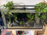 Top Zustand Aquarium Aquascape