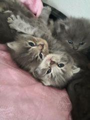 Wiskas babykatzen Mix