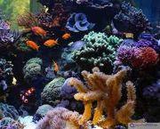 suche Meerwasser aquarium inhalt