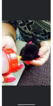 Handaufzucht Flaschenaufzucht von verwaisten Kitten