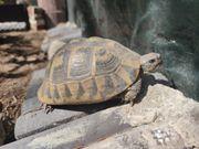 Aufnahme Griechische Landschildkröten THB THH