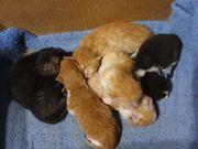Kitten EKH 2 noch frei