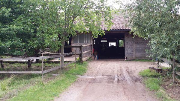 Pferdeboxen frei