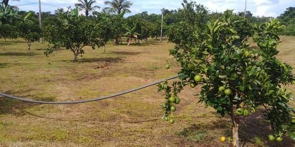 Brasilien 150 Ha Früchtplantagen beim