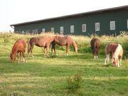 Unsere Ponys freuen sich auf