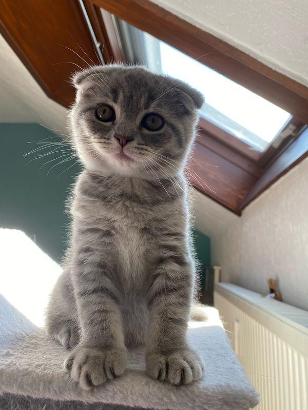 Kitten *abgabebereit*