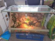 Terrarium mit leopardgecko