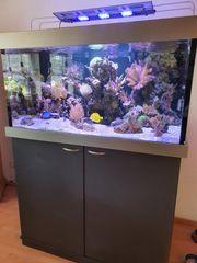 Meerwasser Aquarium 120x80x60 570 Liter