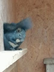 Eichhörnchen Pärchen von Juni 2021