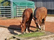 Pflegebeteiligung Bodenarbeit mit Pferden