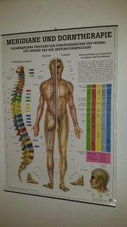 Lehrtafel Meridiane-Dorntherapie