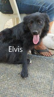 Elvis geb 2020 möchte die