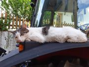Katze Rosali vermisst