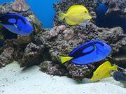 Meerwasseraquarium Beckeninhalt nur Kommplett nicht