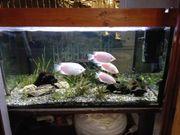Aquarium voll eingerichtet mit Ersatzsteinen