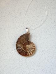 Ketten Anhänger Ammonit Fossile Schnecke