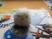 Plüschtier kleine weiße Katze