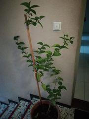 verschiedene Zimmerpflanzen zu verkaufen