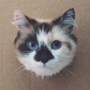 SUCHE eine Mischlingskatze - Perser oder