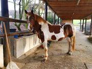 Such für mein Pferd eine