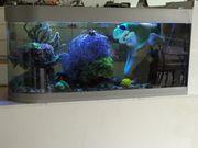Salzwasser Aquarium 450 L U-förmige