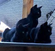 Notfellchen Junge Kätzchen Ende Mai