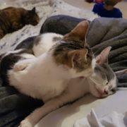 2 süße Katzenkinder sind gemeinsam