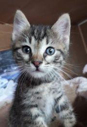 Kleiner Katzenbub Carlino ist bereit