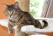 Katze Gretel sucht ein Zuhause