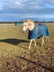 Pflegebeteiligung Reitbeteiligung Reiter sucht Pferd