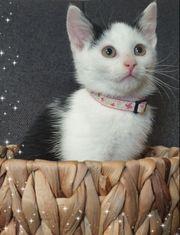 Kätzchen sucht Katze weiblich Kitten