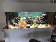 Auflösung Meerwasser Aquarium 300 l