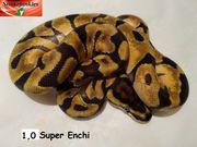 1 0 Super Enchi