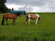 Pferdebox in Privatstall in OT