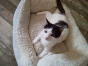 Gipsy Katze aus dem Tierschutz