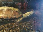 Schildkröte mit Aquarium