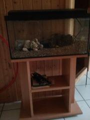neuwertiges Aquarium