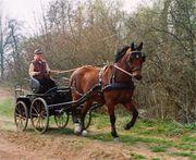 Pferdekutsche Kutsche Marathonwagen Einspänner Einspännerwagen