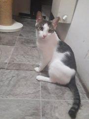 Katzenjunge Kevin möchte Deine Welt
