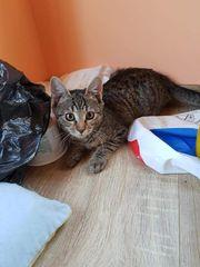 Lola Katze aus dem Tierschutz