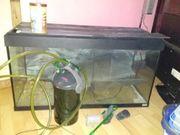 grosses aquarium und grosse aquarium