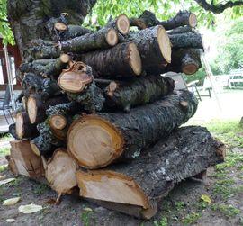 Holz - Holz vom Kirschbaum Kirschbaumholz
