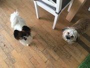 Hundeferienbetreuung gegenseitig